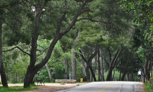 Marjan-cesta